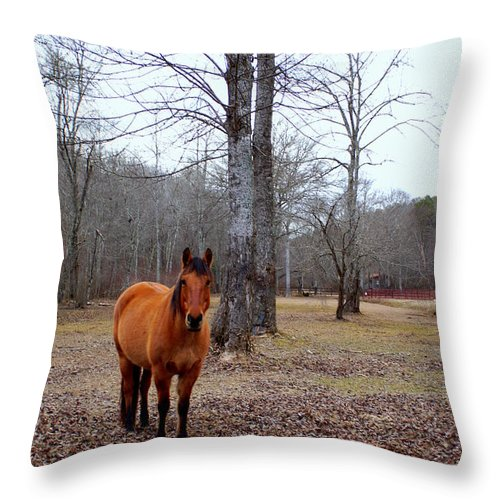 Western Throw Pillow featuring the photograph Keeping Watch by John Wall