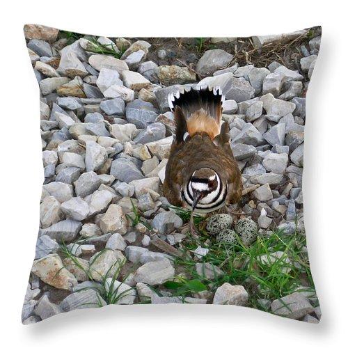 Kildeer Throw Pillow featuring the photograph Kildeer And Eggs by Douglas Barnett