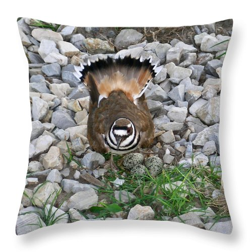 Kildeer Throw Pillow featuring the photograph Kildeer And Nest by Douglas Barnett