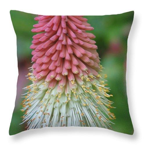 Flower Throw Pillow featuring the photograph Kilmokea by Kelly Mezzapelle