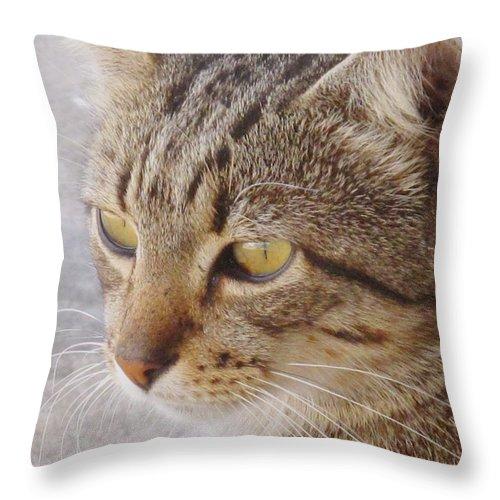 Cat Throw Pillow featuring the photograph King Cat by Ian MacDonald