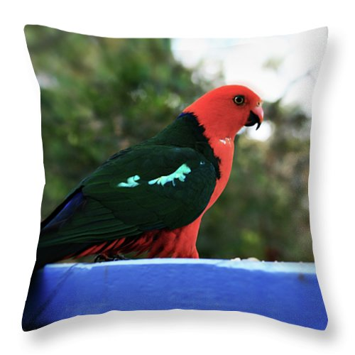 King Parrot Throw Pillow featuring the photograph King Of The Parrots by Douglas Barnard
