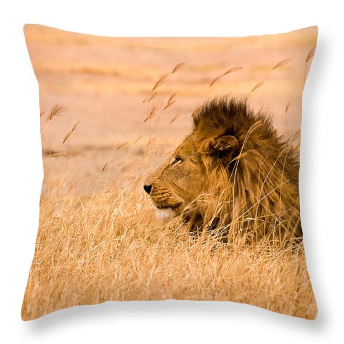 3scape Throw Pillow featuring the photograph King Of The Pride by Adam Romanowicz