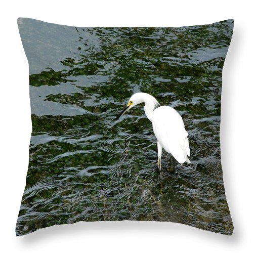 Kingston Throw Pillow featuring the photograph Kingston Jamaica Egret by Brett Winn