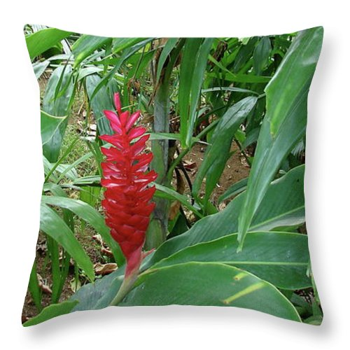 Kingston Throw Pillow featuring the photograph Kingston Jamaica Foliage by Brett Winn