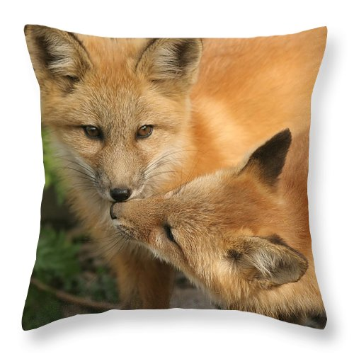 Red Fox Throw Pillow featuring the photograph Kiss by Doris Potter