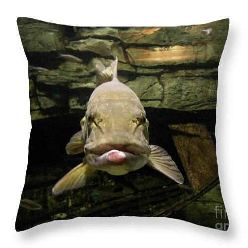 Fish Throw Pillow featuring the photograph Kiss Me You Fool by Donna Brown