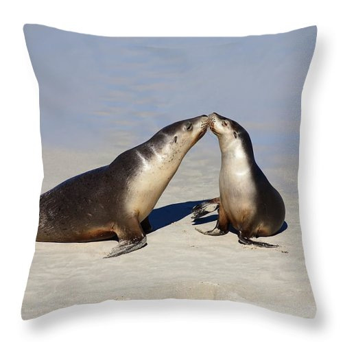 Sea Lion Throw Pillow featuring the photograph Kiss by Mike Dawson