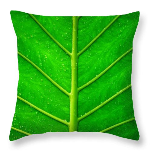 Plant Throw Pillow featuring the photograph Kiss The Rain ... by Juergen Weiss