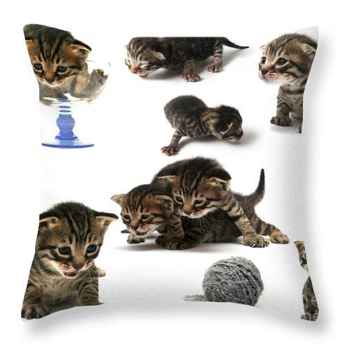 Cat Cats Throw Pillow featuring the photograph Kitten Collage by Yedidya yos mizrachi