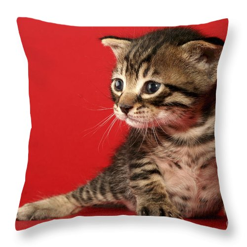 Cat Throw Pillow featuring the photograph Kitten On Red by Yedidya yos mizrachi