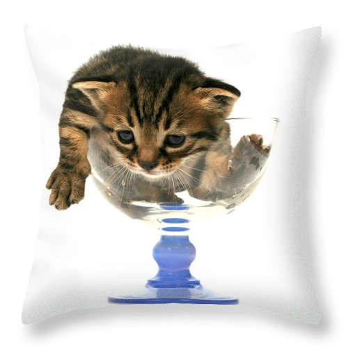 Cat Throw Pillow featuring the photograph Kitten Sits In A Glass by Yedidya yos mizrachi