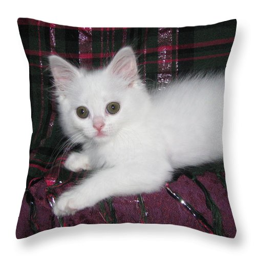 Kitten Snow White On Emerald Green And Metallic Pink Plaid Silktapestrykittenstm Throw Pillow featuring the photograph Kitten Snow White On Green And Pink Plaid by Pamela Benham