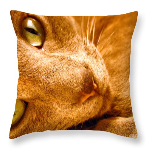Cats Throw Pillow featuring the photograph Kitty by Amanda Barcon