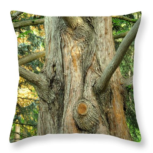 Tree Throw Pillow featuring the photograph Knarled by Ian MacDonald