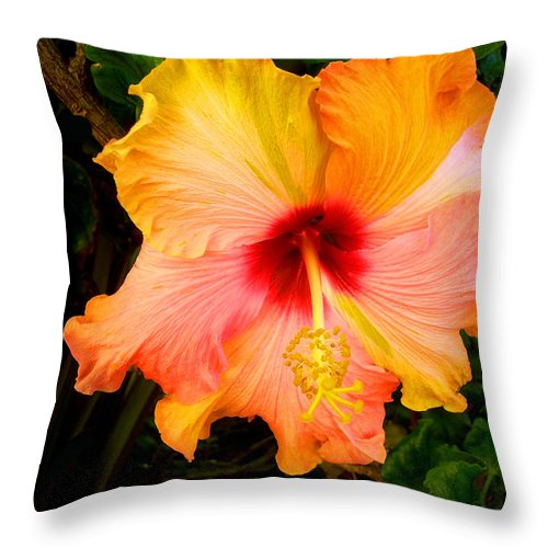 Hibiscus Throw Pillow featuring the photograph Knightsbridge Hibiscus by Michael Durst
