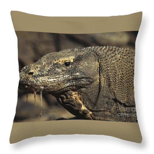 Komodo Dragon Throw Pillow featuring the photograph Komodo Dragon by Reptiles4all
