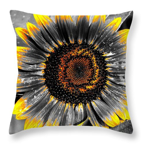 Throw Pillow featuring the photograph Krypton's Sun Flower Bwy by Daniel Thompson