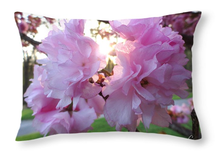 Kwanzan Throw Pillow featuring the photograph Kwanzan Cherry Blossom by Christopher Spicer