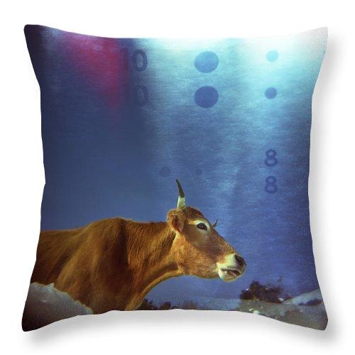 Cow Throw Pillow featuring the photograph La Vache Numerique by Rafa Rivas