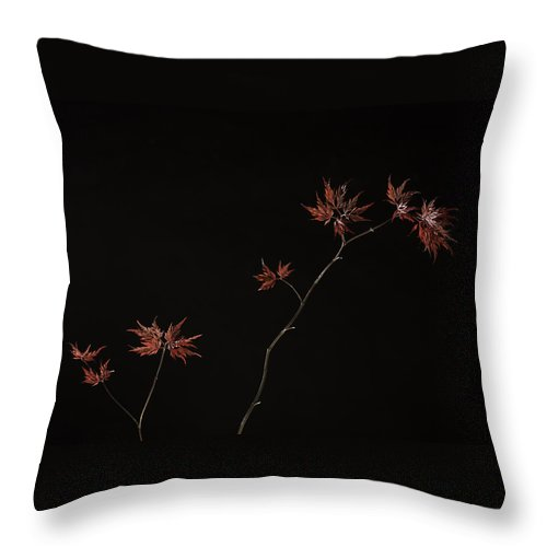 Japanese Throw Pillow featuring the photograph Lace Leaf Maple by Herman Robert
