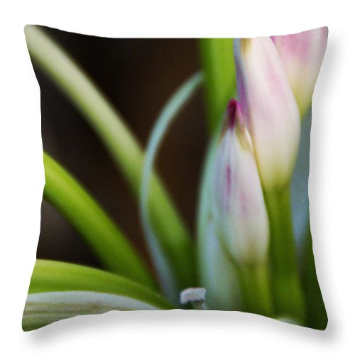 Flower Throw Pillow featuring the photograph Laced In Satin by Linda Shafer