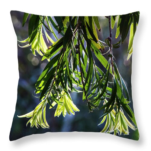 Arboretum Throw Pillow featuring the photograph Lacey Leaves by Kathy McClure