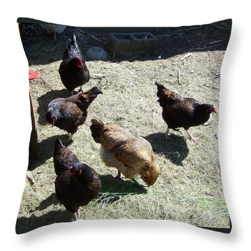 Hens Throw Pillow featuring the photograph Ladies Of The Pen by Laurie Kidd