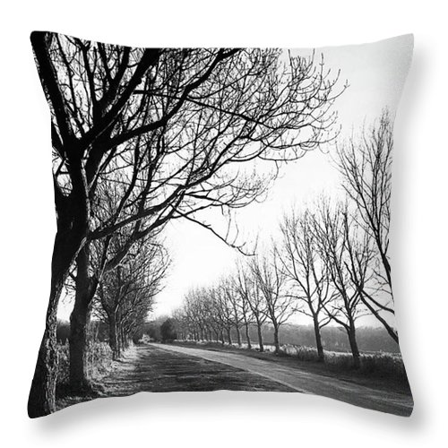 Natureonly Throw Pillow featuring the photograph Lady Anne's Drive, Holkham by John Edwards
