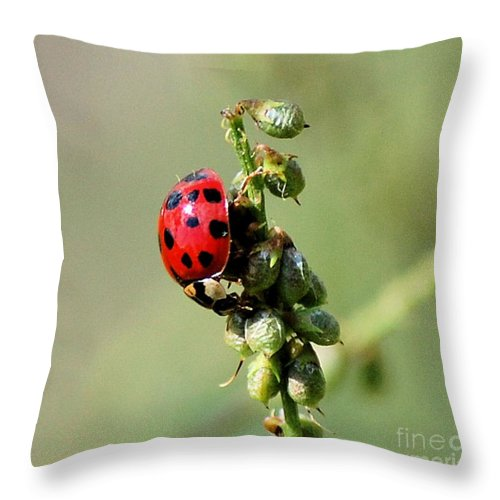 Landscape Throw Pillow featuring the photograph Lady Beetle by David Lane