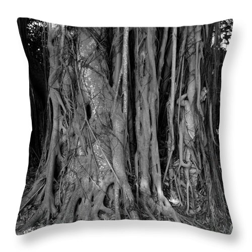 Banyan Trees Throw Pillow featuring the photograph Lady In The Banyans by David Lee Thompson