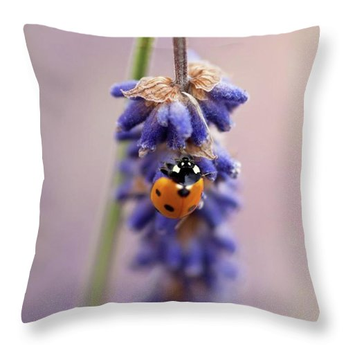 Ladybug Throw Pillow featuring the photograph Ladybird On Norfolk Lavender  #norfolk by John Edwards