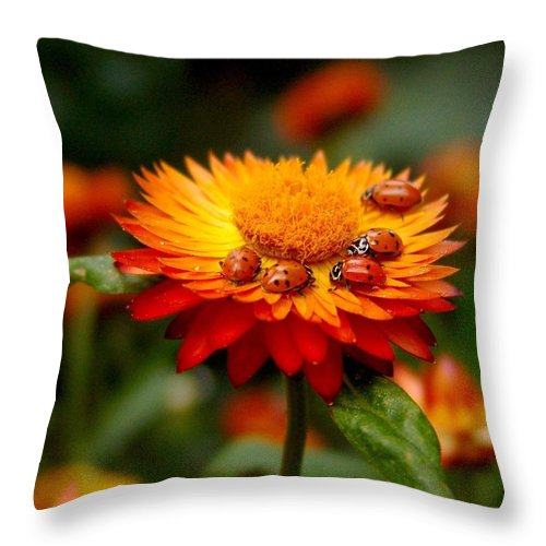 Flower Throw Pillow featuring the photograph Ladybug Gathering by Carol Milisen