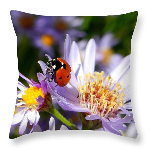 Ladybug Throw Pillow featuring the photograph Ladybug Shows Her Heart by Roger Medbery