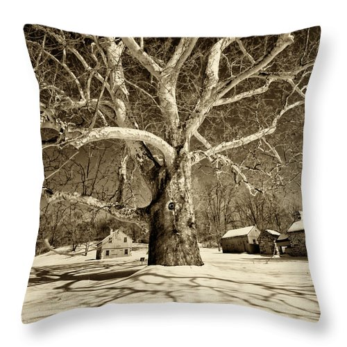 Sycamore Tree Throw Pillow featuring the photograph Lafayette Headquarters by Jack Paolini