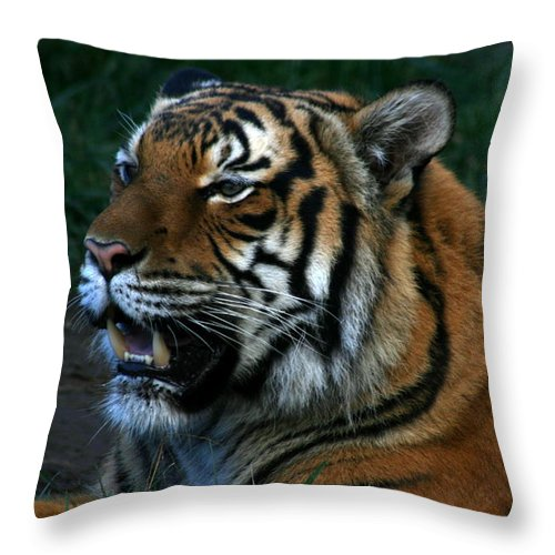 Tiger Throw Pillow featuring the photograph Laid Back For Now by David Dunham