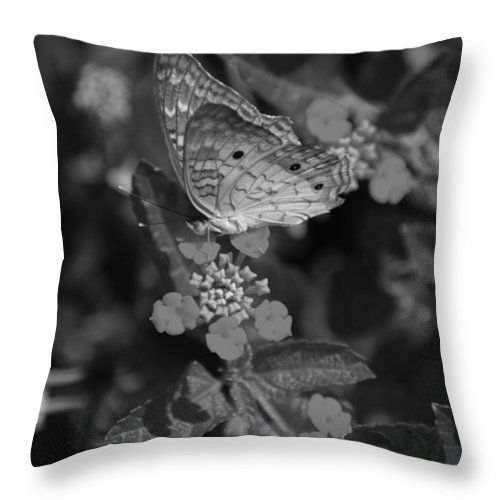 Black And White Throw Pillow featuring the photograph Landed by Rob Hans