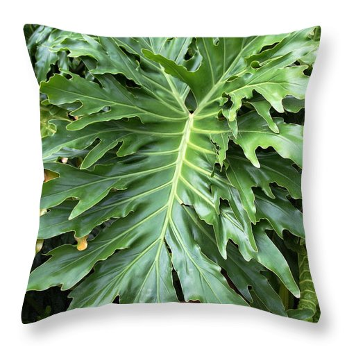 Fern Throw Pillow featuring the photograph Large Fern by Kenna Westerman