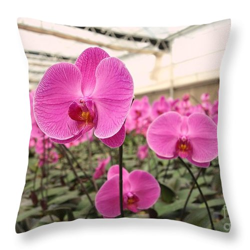 Orchid Throw Pillow featuring the photograph Large Orchid Nursery by Yali Shi