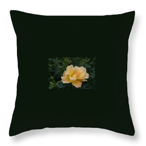 Yellow Rose Throw Pillow featuring the photograph Large Yellow Rose II by Jacqueline Russell