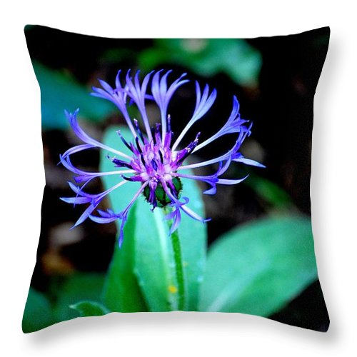 Digital Photograph Throw Pillow featuring the photograph Last Flower In The Garden by David Lane