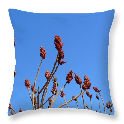 Sky Throw Pillow featuring the photograph Last Year's Sumac by Peggy King