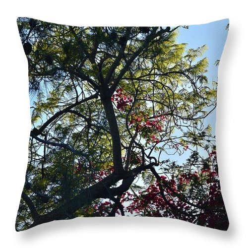 Linda Brody Throw Pillow featuring the photograph Late Afternoon Tree Silhouette With Bougainvileas II by Linda Brody