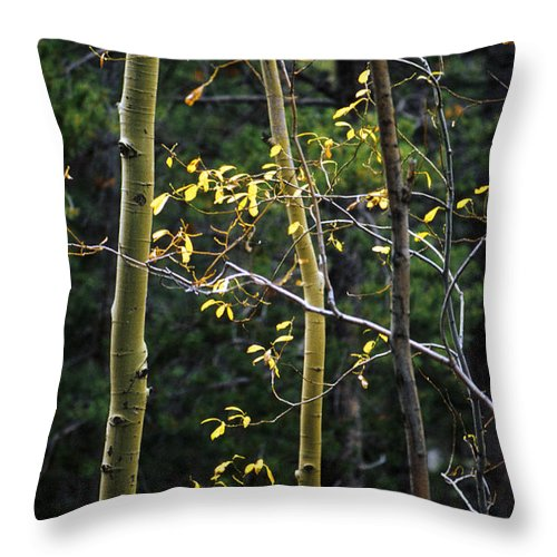 Aspen Throw Pillow featuring the photograph Late Aspen by Jerry McElroy