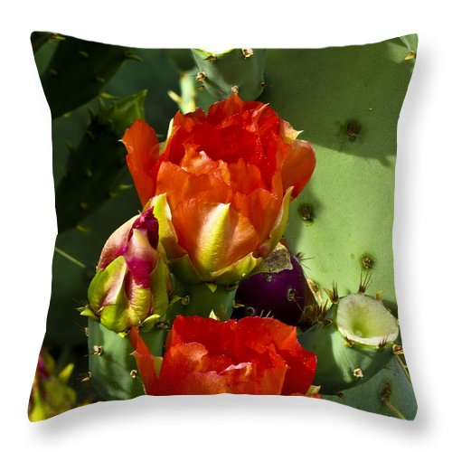 Arizona Throw Pillow featuring the photograph Late Bloomer by Kathy McClure