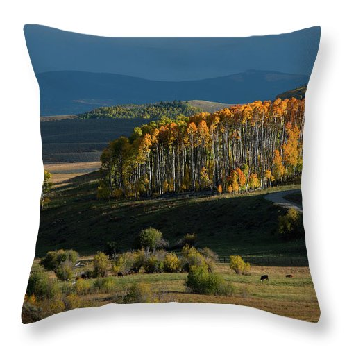 Colorado Throw Pillow featuring the photograph Late Stand by Dana Sohr