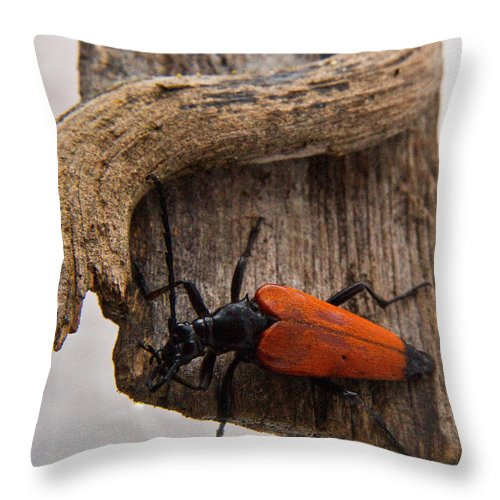 Laughing Throw Pillow featuring the photograph Laughing Beetle by Douglas Barnett
