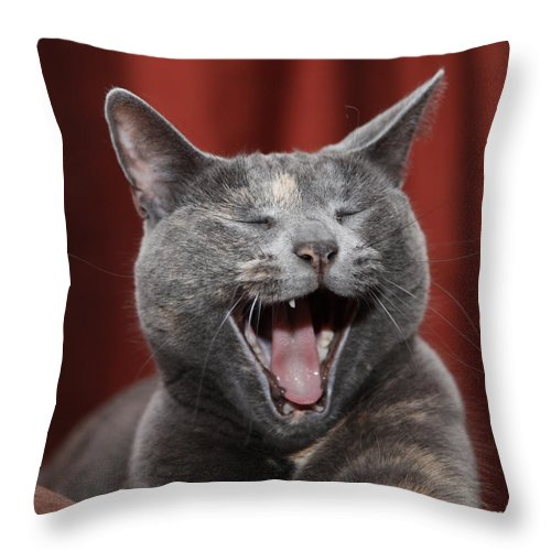Kitty Throw Pillow featuring the photograph Laughing Kitty by Amanda Barcon