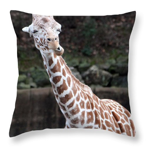 Laughing Giraffe Throw Pillow featuring the photograph Laughter by Amanda Barcon