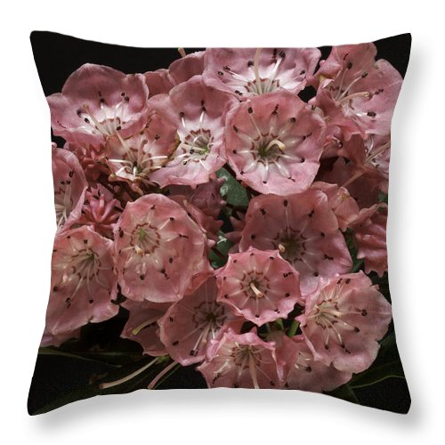 Flower Throw Pillow featuring the photograph Laurel by Fran Gallogly